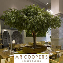 Mr Coopers House & Garden